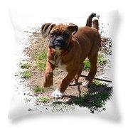 Boxer Puppy 14-1 Throw Pillow