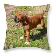 Boxer Puppy 2 Throw Pillow by Maria Urso