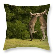 Boxers Throw Pillow