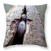Br0040 Throw Pillow