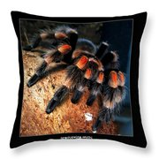 Brachypelma Smithi - Redknee Tarantula Throw Pillow