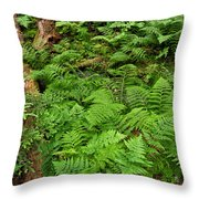 Bracken Throw Pillow
