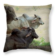 Brahman Cattle Throw Pillow by Peggy Collins