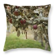 Branch Of An Apple Tree Throw Pillow by Juli Scalzi