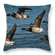 Brandt Geese  Throw Pillow