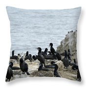 Brandt's Cormorant Colony At Point Lobos State Natural Reserve Throw Pillow