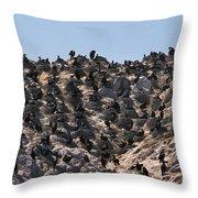 Brandts Cormorant Colony Throw Pillow