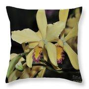 Brassolaeliocattleya Grodsky's Gold Throw Pillow