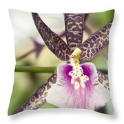 Bratonia Miltassia Charles M Fitch Izumi Orchid Hawaii  Throw Pillow