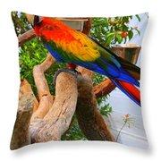 Brazilian Parrot Throw Pillow
