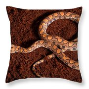 Brazilian Rainbow Boa Throw Pillow