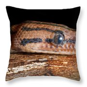 Brazilian Rainbow Boa Epicrates Cenchria Throw Pillow