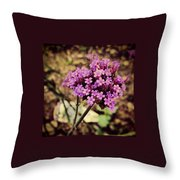 Brazilian Verbena Throw Pillow
