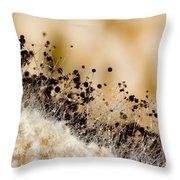 Bread Mold Fungus Rhizopus Nigricans Throw Pillow