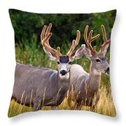 Breakfast With Friends Throw Pillow