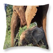 Breakfast With Mother Throw Pillow