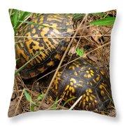 Breeding Box Turtles Throw Pillow