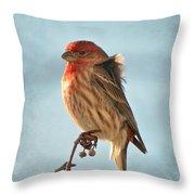 Breezy Morning Housefinch Throw Pillow