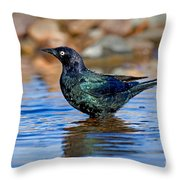 Brewers Blackbird In Water Throw Pillow