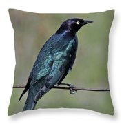 Brewers Blackbird Throw Pillow