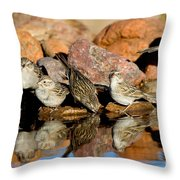 Brewers Sparrows At Waterhole Throw Pillow