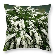 Bridal Wreath Spirea - White Flowers - Florist Throw Pillow