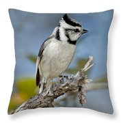 Bridled Titmouse Throw Pillow