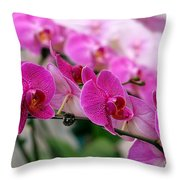 Bright And Purple Butterfly Orchids Throw Pillow