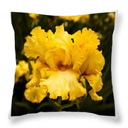 Bright Bright Spring Yellow Iris Flower Fine Art Photography Print  Throw Pillow