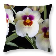 Bright Miltonia Orchids Throw Pillow