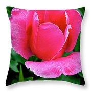 Bright Pink Tulip In Kuekenhof Flower Park-netherlands Throw Pillow