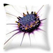 Bright White Osteospermum Throw Pillow