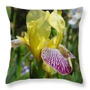 Bright Yellow Purple Iris Flower Irises Throw Pillow