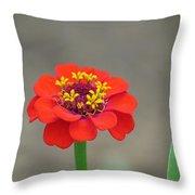 Bright Zinnia Throw Pillow