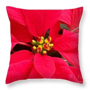 Brightest Red Poinsettia Throw Pillow