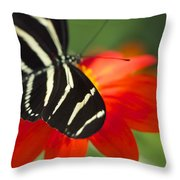 Brilliance Of Color 2047 2 Throw Pillow