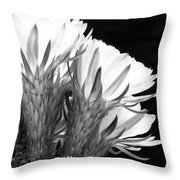 Brilliant Blossoms Diptych Right Throw Pillow