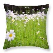 Brilliant Daisies Throw Pillow