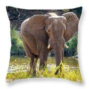Brilliant Elephant Throw Pillow