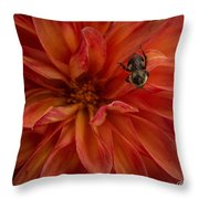 Brilliant Red Dahlia Throw Pillow