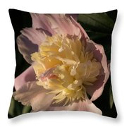Brilliant Spring Sunshine - A Showy Pink Peony From My Garden Throw Pillow