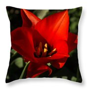 Brilliant Spring Sunshine In Red  Throw Pillow