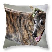 Brindle Greyhound Dog Usa Throw Pillow