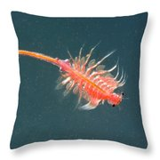 Brine Shrimp Throw Pillow