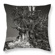 Bristlecone And Wildflowers In Black And White Throw Pillow