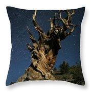 Bristlecone By Moonlight Throw Pillow by Karen Lindquist