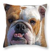 British Bully Throw Pillow