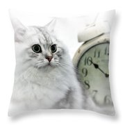 British Longhair Cat Time Goes By II Throw Pillow