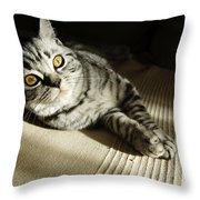 British Short Hair Throw Pillow