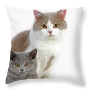 British Shorthair Lilac Et Blanc Throw Pillow